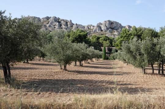 Terrains 13430 eygui res partir de 148 000 azur logement proven al - Terrain a vendre salon de provence ...